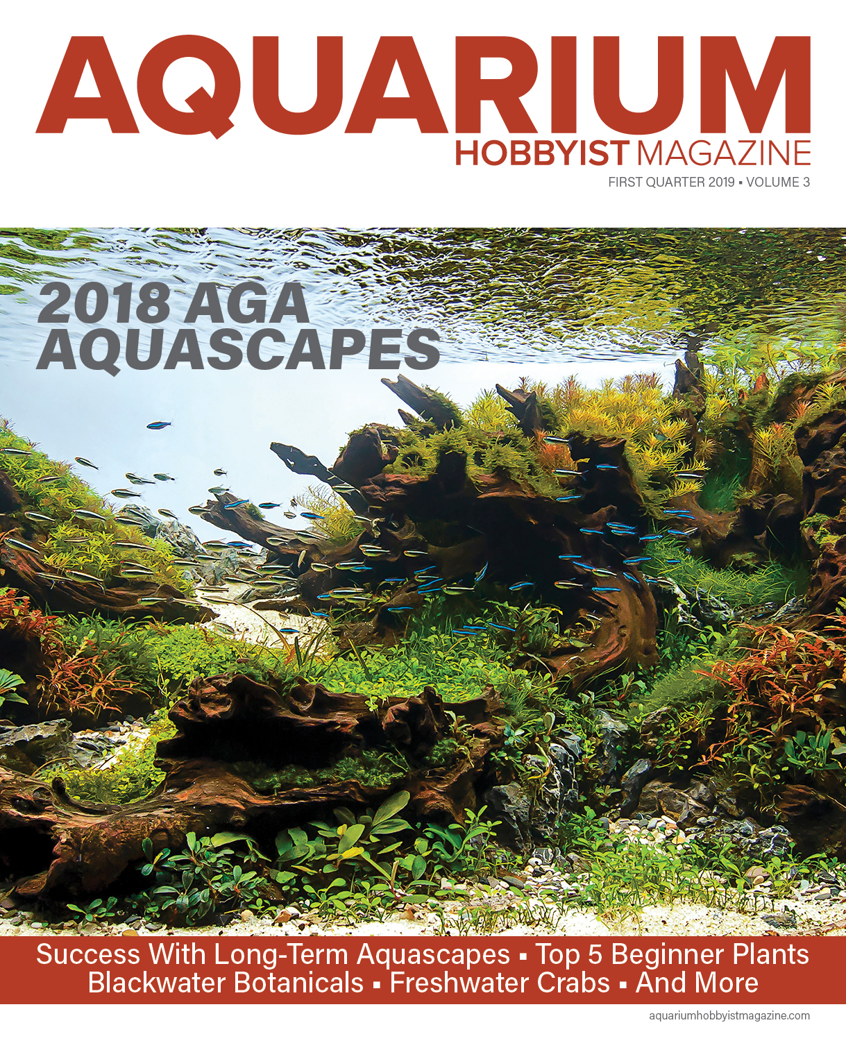 Aquascaping For Beginners Pdf - Aquascape Ideas